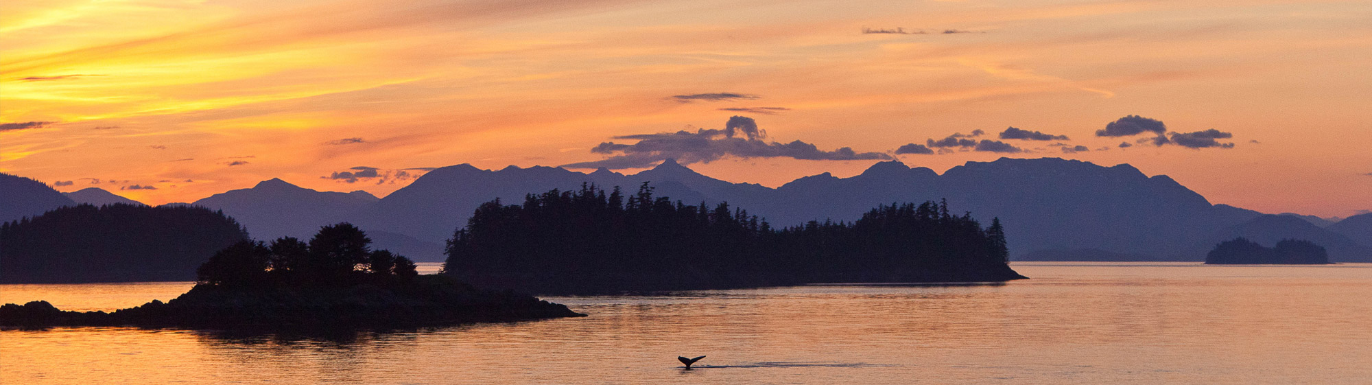 sunset in Alaska with a whale breaching in the foreground